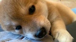 犬の亡くなる命を守るため飼育の施設環境を整備したい