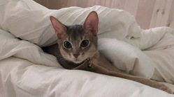 小さな命を未来に繋げたい〜FIP(猫伝染性腹膜炎)を患った愛猫