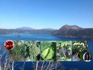 北海道の安心安全な無農薬野菜をたくさんの人に届けたい!