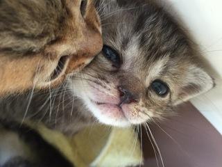 長野県上田市に保護猫カフェを作りたい!!