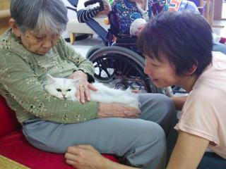 猫と一緒に老人養護施設を訪問し、お年寄りたちの心を癒したい!