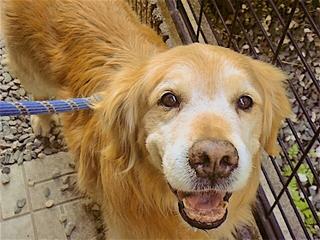 殺処分を待つ老犬や障害犬を安全なバリアフリー施設に保護したい