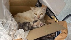 不幸な命を産まさない 不妊手術で救いたい猫の命 【第三弾】