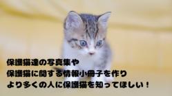 【保護猫カフェあんちゃん】保護猫写真集で保護猫を知ってもらいたい