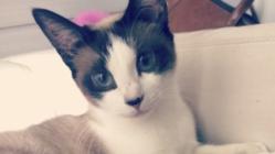 飼い猫クロエの手術費用