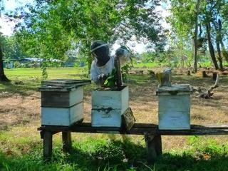 ソロモンの熱帯雨林を守る養蜂を応援!4箱の巣箱を100箱に!