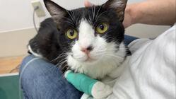 猫伝染性腹膜炎(FIP)と闘う「むーくん」にご支援をお願いします