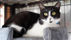 保護猫カフェmoffmoffを守りたい!