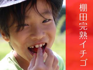 流通していない旬の味『完熟いちご』を皆に食べてもらいたい!