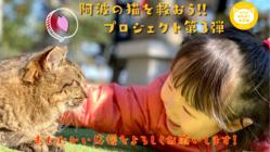 【第3弾】阿波の猫たちを救う。過酷な環境下で暮らす猫のいない未来へ