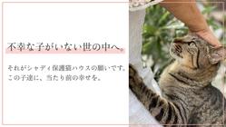 シャディ保護猫ハウス|コロナ禍でも、不幸な子を救い続けたい。