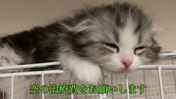 愛猫の空(くう)の手術、治療費用をお願いします