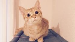 FIP(猫伝染性腹膜炎)と闘う小さな命にどうか力を貸してください