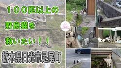 100匹以上の野良猫を救いたい!~栃木県日光市足尾町~