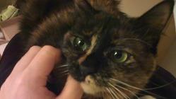 【追悼】難病患者の愛猫の抗がん治療を支援してください