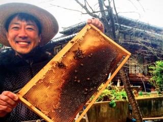 日本一緑が少ない大阪で体験型ミツバチファームをつくりたい!