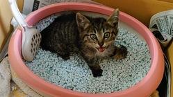 交通事故に遭い骨折していた子猫の治療費のご支援お願いします!