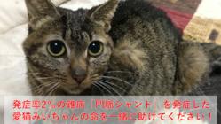 難病「門脈シャント」を発症した愛猫みいちゃんの命を助けてください