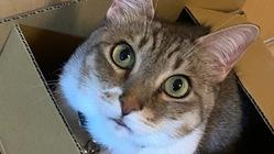 猫(7歳)の鼻腔内リンパ腫の治療費のご協力お願いします!