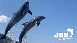 #イルカと共に人生をより良くする 日本ドルフィンセンターの挑戦