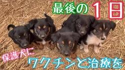 小さなワンコ保護施設を日本にも作りたい!百年続くワンコ支援を世界で