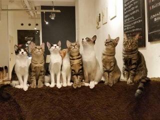 猫トイレの販売を通して、福岡で9年目の保護猫カフェを続けたい!