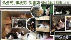 保護活動を中心に保護した猫ちゃんたちを幸せにする
