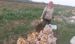 シリア内戦から10年。農家の人たちの復興への一歩を支えたい!