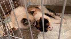 保護ネコ2匹の手術