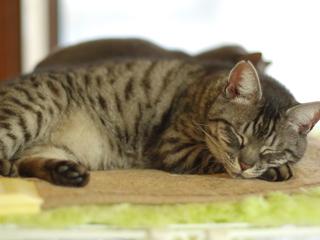 地域猫の保護活動を支援するイベント「猫の世界」を開催したい!