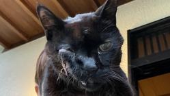 扁平上皮癌を患っている愛猫を助けてください