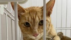 助けてください!交通事故にあった猫を保護しました。