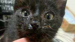 黒猫の赤ちゃんを保護しました
