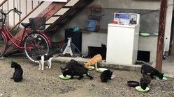 建替えを控えた古いアパートに住んでいる30頭の猫達を緊急で助けたい
