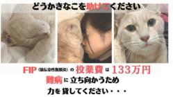 猫コロナウイルスが突然変異し病気となった猫の命を救いたい