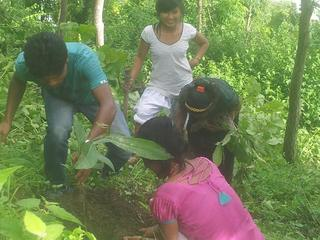 ネパールの貴重な自然、ハチミツが採れるチウリの樹を守りたい!
