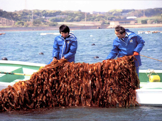 海藻が作る「海の森」を知ってもらい、豊かな海を守り続けたい!
