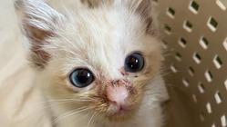 尿路閉塞と戦っているモグちゃんを助けてください。