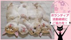 ネコの癒やしで日本全国のご老人に笑顔のひとときを届けたい!