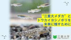 """絶滅危惧種""""三重大メダカ""""とトウカイヨシノボリの保全池を整備したい"""