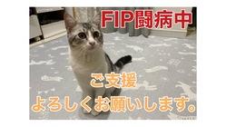 FIP(猫伝染性腹膜炎)と戦うトムを助けてください。