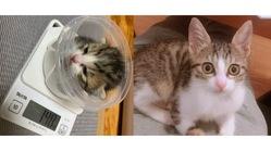 幼い命を救いたい・FIP(猫伝染性腹膜炎)りんにお力をお貸し下さい