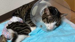 原因不明の下半身マヒ&食道狭窄の愛猫を救いたい