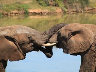 象を絶滅から守るため、象のうんこのアート展を全国巡回させたい