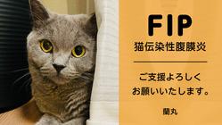 猫伝染性腹膜炎(FIP)の治療にご支援、ご協力をお願いいたします。