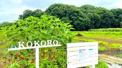 kokoro's farm 亡き母ちゃんの畑が水害に…