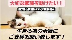 猫伝染性腹膜炎(FIP)になったロムを助けてください