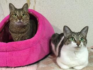 被災地などで保護された猫のための、猫カフェをオープンしたい!