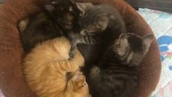 【生涯の家族へ繋ぎたい】保護猫達への資金援助をお願いします。