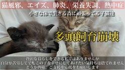 残り数日。飼育崩壊の家から瀕死状態の子猫レスキュー助けであげたい。